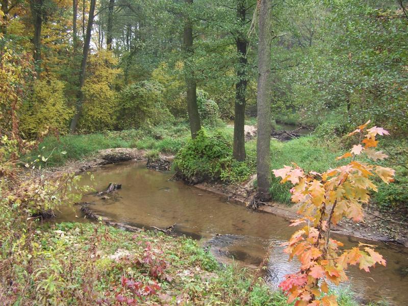 Rzeka Brzuśnia